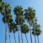 palm-trees-1256206